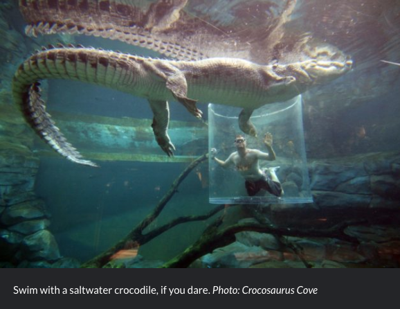 Swim with a saltwater crocodile