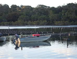 Tathra Oysters is just one of the oyster farms to visit on the Sapphire Coast. Picture: Joan MurphySource:Supplied